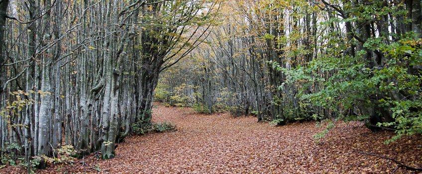 boschi foreste casentinesi