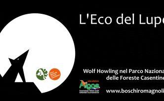 wolf howling boschiromagnoli