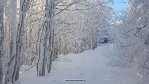 neve campigna boschiromagnoli
