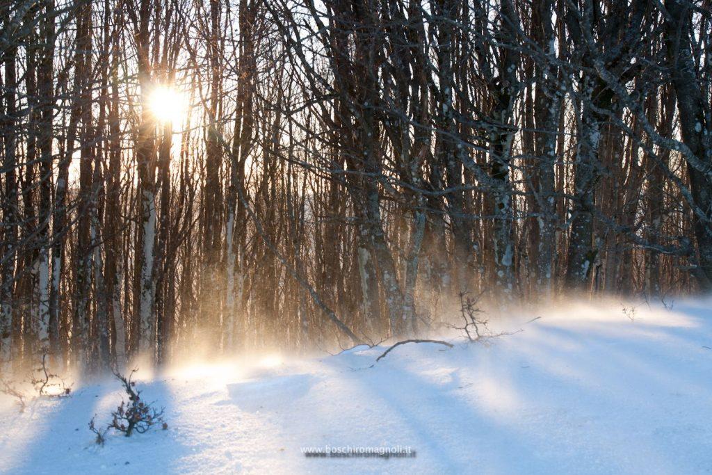 corso fotografia foreste casentinesi