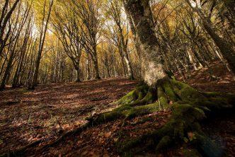 boschi romagnoli trekking