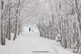 neve campigna