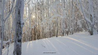 neve bosco campigna
