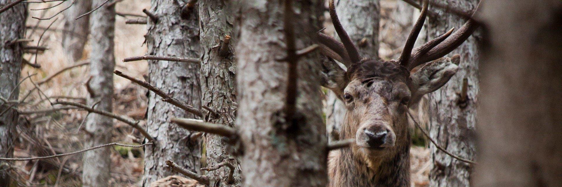 trekking bramito foreste casentinesi