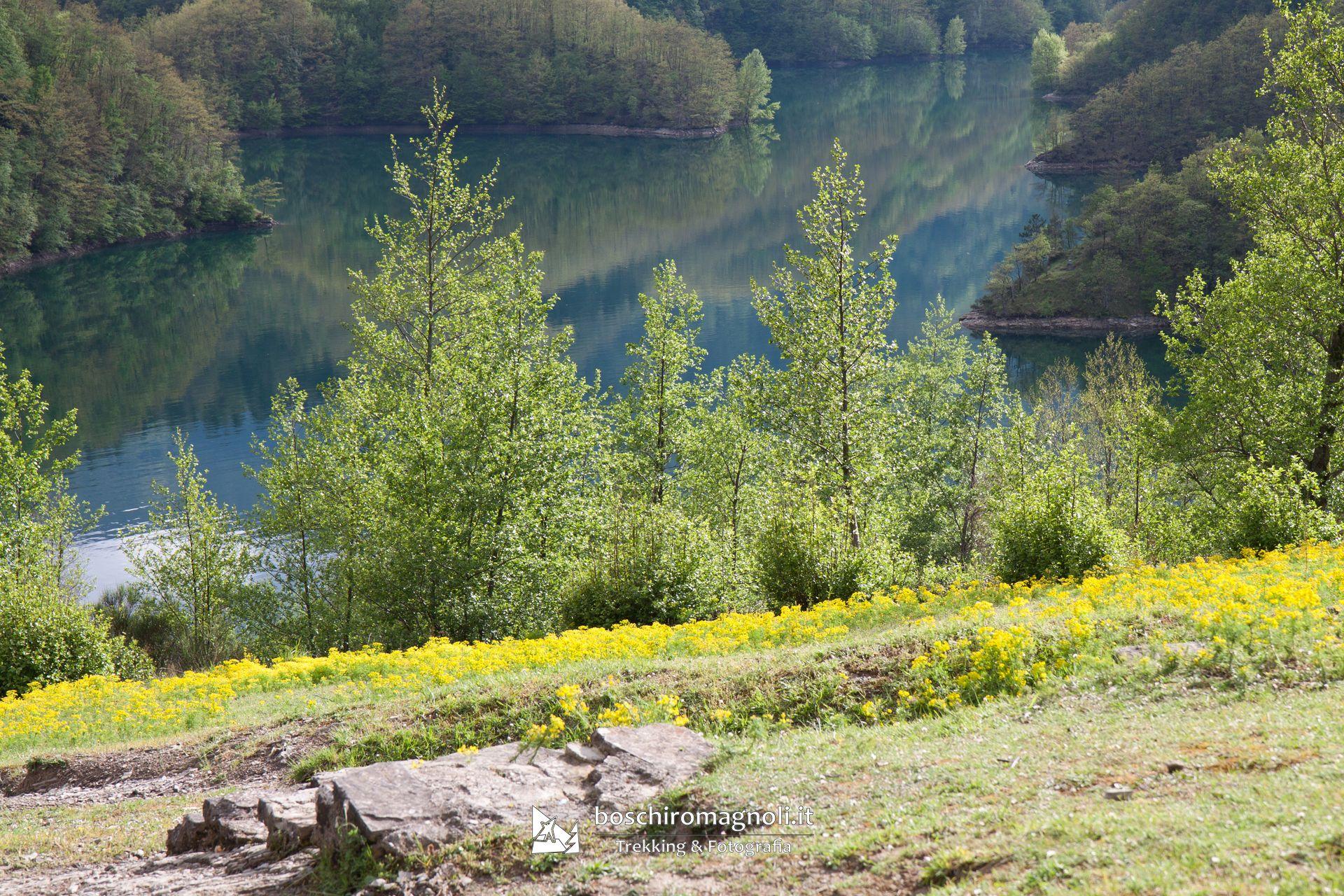 Lago Ridracoli fiori