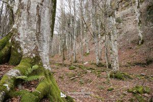 Sasso Fratino Trekking Foreste Casentinesi