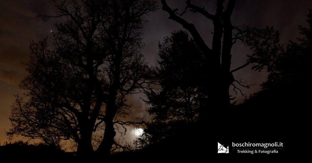 foresta di notte