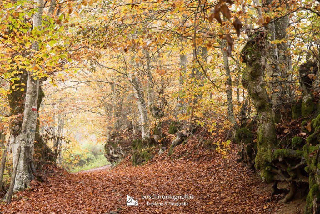 Sentieri Fumaiolo autunno
