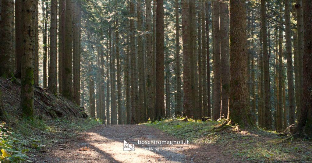 abeti foreste casentinesi