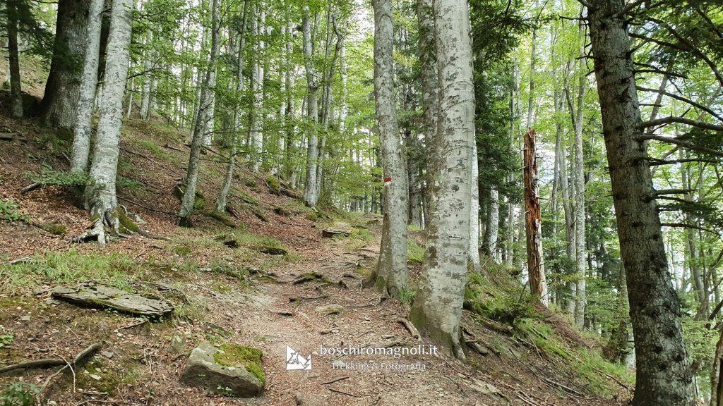 foresta Campigna Parco Nazionale
