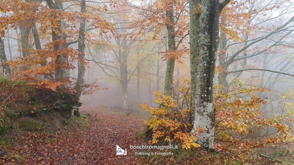 Faggi nebbia Monte Bucine