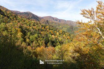 foresta Campigna autunno