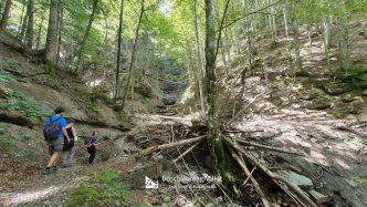 foresta Campigna trekking