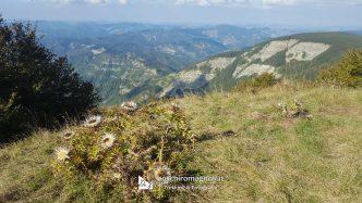 vista monte Falterona